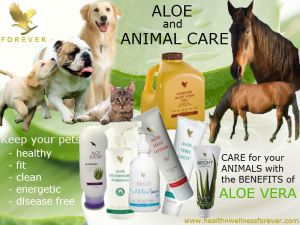 Aloe and animal care